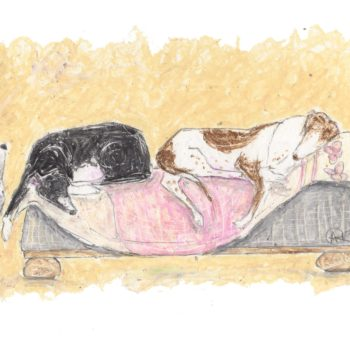 This humorous dog art has been created by artist Amanda Reynolds using oil pastels and kohl pencils. The image is of a side profile view of a large wooden bed with white and blue bedding. On the bed are three greyhounds fast asleep in various dog sleeping positions. Next to the bed is a large padded seating stool with two more greyhounds on fast asleep laid on a pink quilt. The greyhounds are a black greyhound with white socks. A fawn greyhound. A grey greyhound with white socks. A black greyhound and a brown and white greyhound.