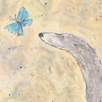 This is an oil pastel picture with watercolour wash of a gentle grey whippet who is timidly investigating a little blue butterfly. This is a side view profile of the whippet with their tail between in their legs. The colours are a background of creams and a soft grey pastel on the whippet close up of the whippets head and butterfly detail.