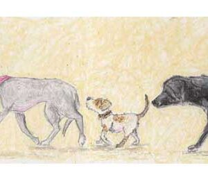 Real Friends Sniff Bums was originally created by artist Amanda Reynolds in oil pastel and kohl pencil. This image of some dogs in line sniffing each others bums as they walk along. The dogs are in a side profile. The first dog in the line is a brown and white basset hound. Followed by a grey greyhound wearing a neckerchief. The next dog in line is a little brown and white terrier with a brown eye patch. Then a black Labrador sniffs the scruffy terriers bum. Finally at the end of the friendly line is a little chihuahua wearing a collar with a love heart on. Standing on their back legs to try and reach the taller Labradors bottom.