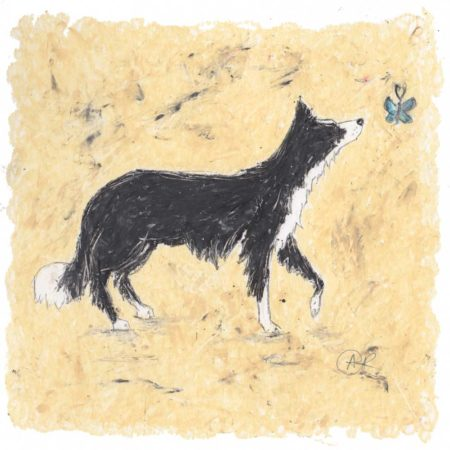 This is a beautiful piece of art of a Collie dog created by artist Amanda Reynolds in oil pastels. The Collie dog is viewed in a side profile and is black and white. The Collie dog looks inquisitively at a little blue butterfly.