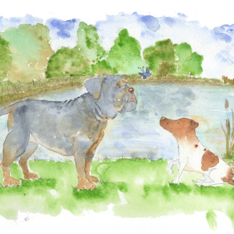 A beautiful watercolour pet portrait commission of a blue olde english bull dog and a white and tan parsons jack Russell. They are both looking at a blue butterfly as they stand by the side of their lake in their large garden. There are a pair of crocs propped up next to a fishing tackle bag as these represent the customers husband as this was a birthday gift for his 40th birthday. The lake is a calm blue and the green summer trees surround it with reeds in the foreground.