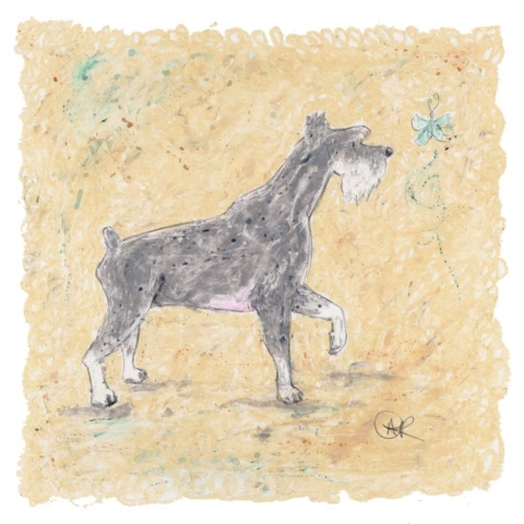 This is an oil pastel dog print of a gorgeous grey Schnauzer dog. He is grey and the image is of a side profile schnauzer. A fantastic limited edition dog print by artist Amanda Reynolds