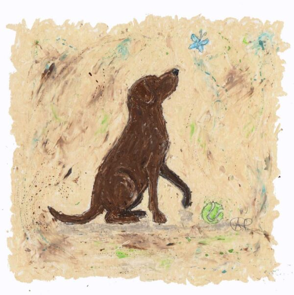 This painting of a Chocolate Labrador was originally created in oil pastels with kohl pencil and watercolour wash. The Chocolate Labrador sits, side profile looking inquisitively at a little blue butterfly as it flutters by. A green tennis ball is at the feet of the Chocolate Labrador.