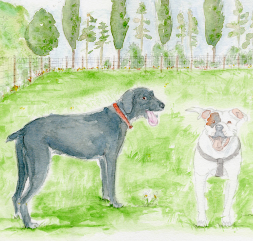 This is a beautiful Pet Portrait I have created in watercolour for a customer who wishes to use the image to advertise their enclosed dog walking field. The image is of a white staffy with brown eye patch, doing the smiling staffy face. The black dog is a crossbreed whos tongue is hanging out the side of their mouth in a funny way.