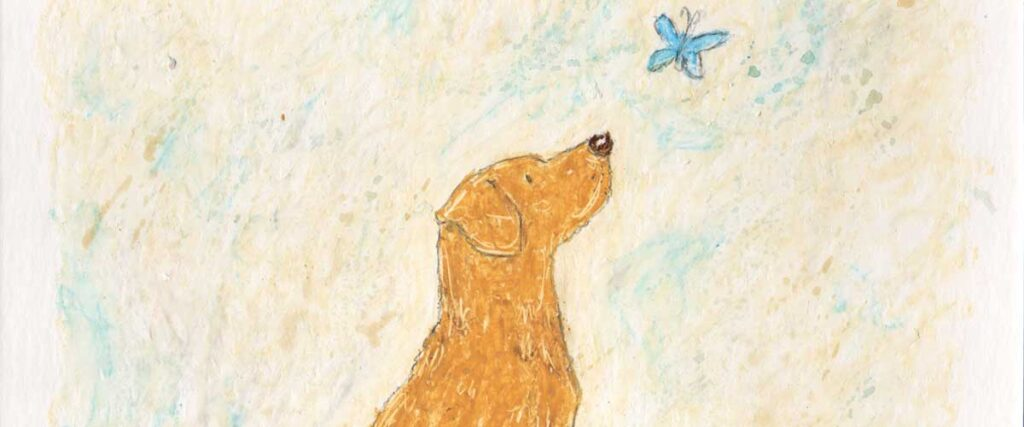 Labrador by Amanda Reynolds is a simple oil pastel with a watercolour wash of a side profile view of a yellow / fox red Labrador holding their paw up with a tennis ball at their feet. The Labrador is looking at a little blue butterfly that floats just above their head. Simply beautiful.