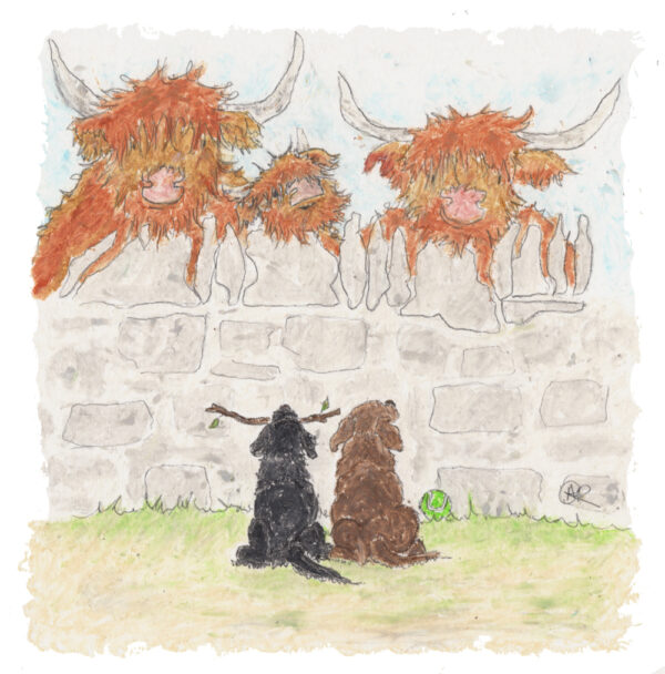 This picture is three highland cows behind an old stone wall sticking their heads over the top with two Labradors looking up at them one is black one brown and the black one has a stick in its mouth with two little leaves on it.